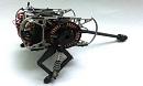 В полку роботов животных появилось пополнение это робот тушканчик, а точнее пока его прототип.