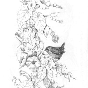 Рисунок-для-выжигания_Крапивник-на-вьюнке